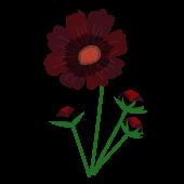 チョコレートコスモス・秋の花のイラスト
