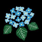 ほっこり水色の紫陽花(アジサイ) 無料 イラスト