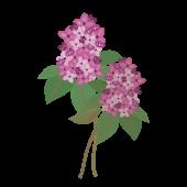 かわいい♪ライラックの 無料 イラスト【花】