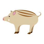 かわいい ♪ 猪(亥 / イノシシ)の 無料 イラスト