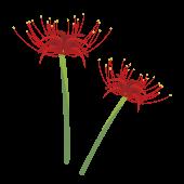 【花】彼岸花(ヒガンバナ)の フリー イラスト